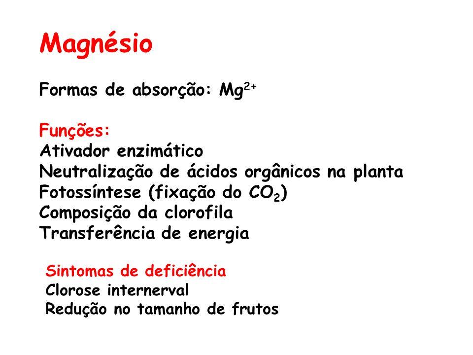 Magnésio Formas de absorção: Mg2+ Funções: Ativador enzimático