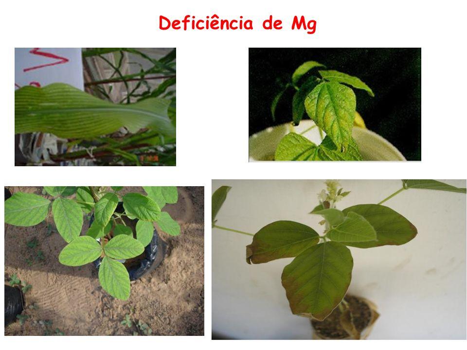 Deficiência de Mg