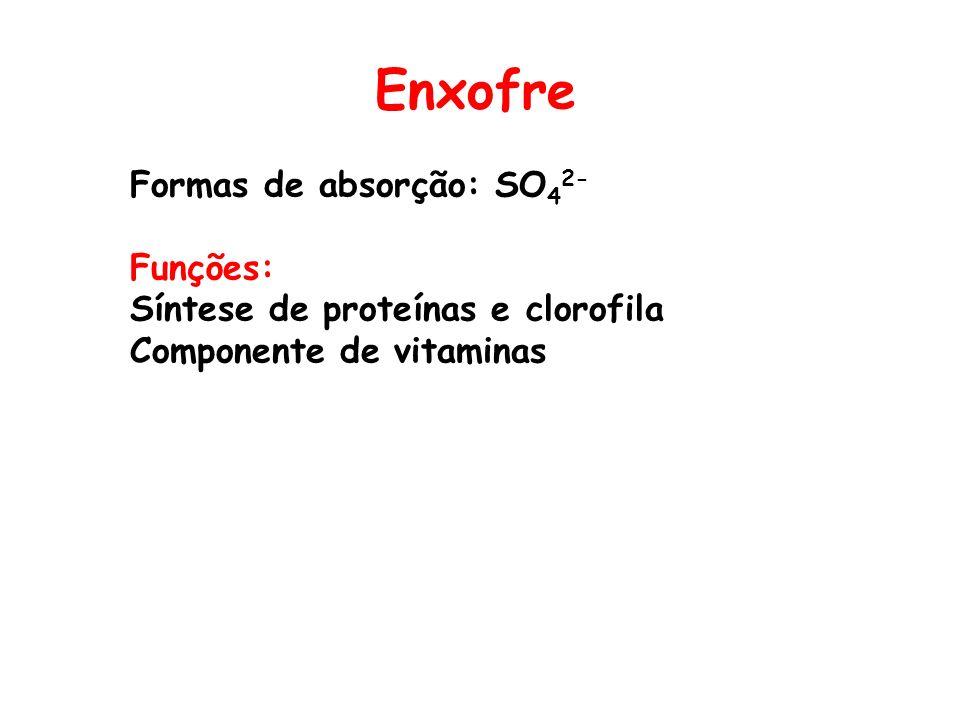 Enxofre Formas de absorção: SO42- Funções: