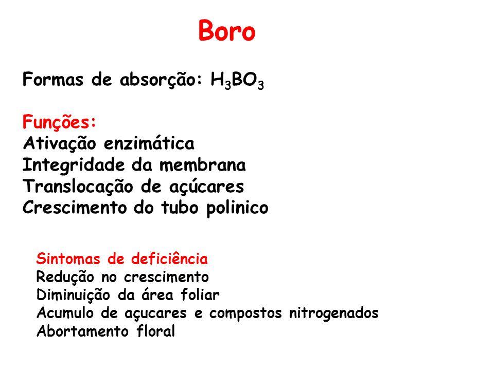 Boro Formas de absorção: H3BO3 Funções: Ativação enzimática