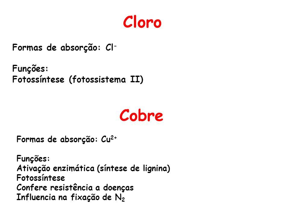Cloro Cobre Formas de absorção: Cl- Funções: