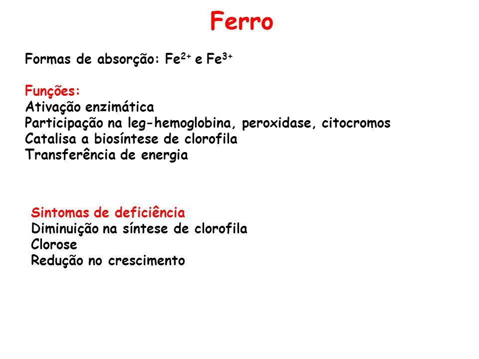 Ferro Formas de absorção: Fe2+ e Fe3+ Funções: Ativação enzimática
