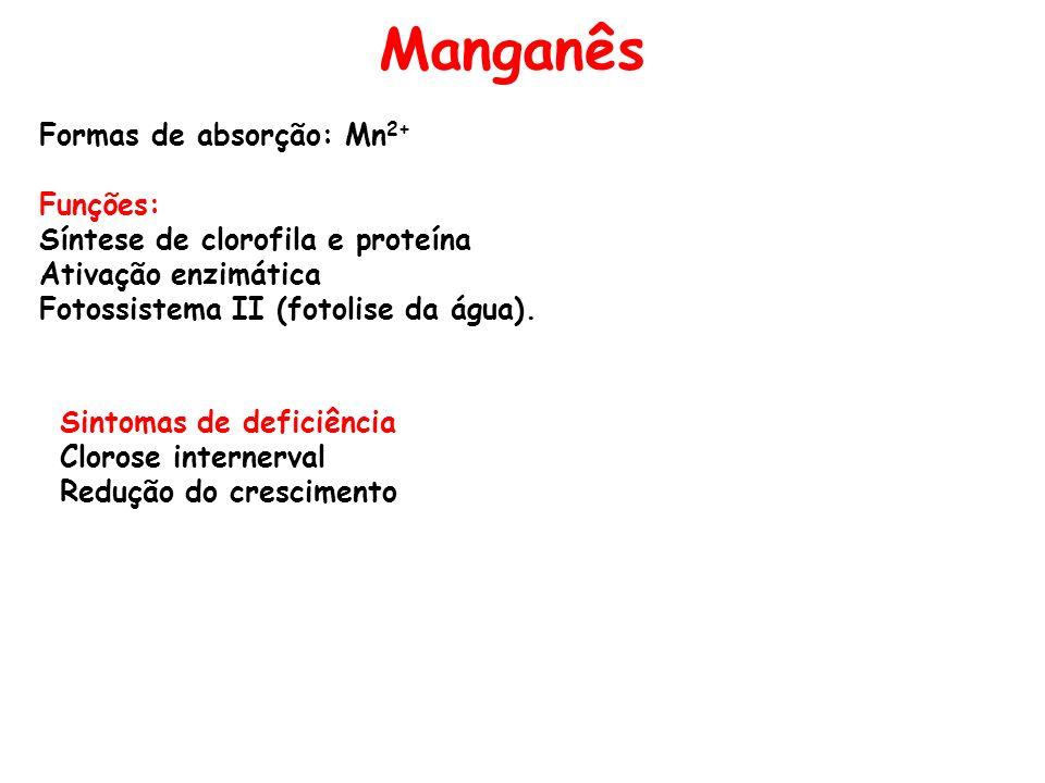 Manganês Formas de absorção: Mn2+ Funções:
