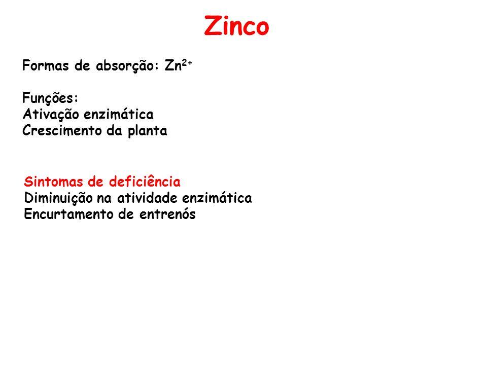Zinco Formas de absorção: Zn2+ Funções: Ativação enzimática