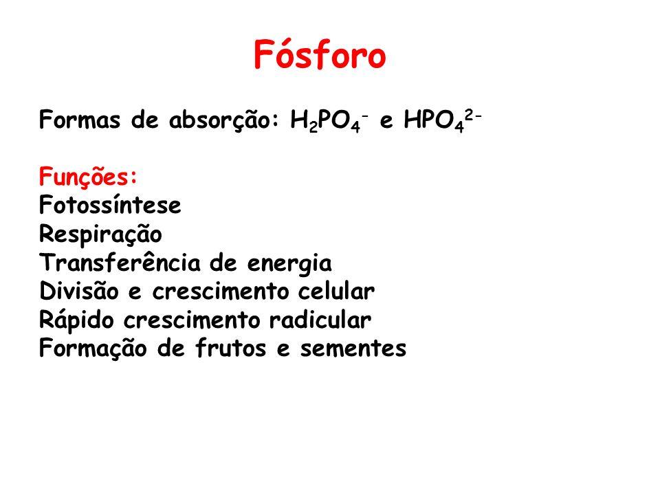 Fósforo Formas de absorção: H2PO4- e HPO42- Funções: Fotossíntese