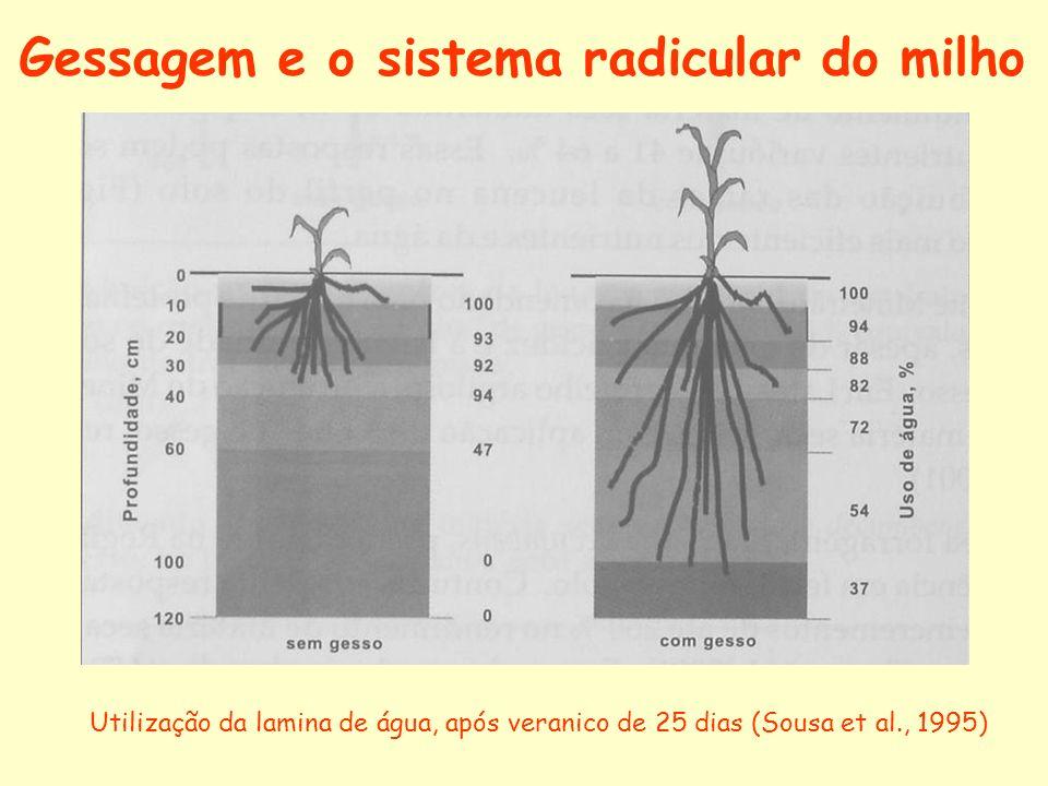Gessagem e o sistema radicular do milho