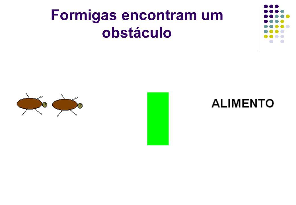 Formigas encontram um obstáculo