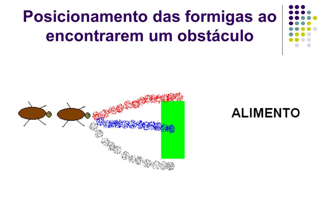 Posicionamento das formigas ao encontrarem um obstáculo