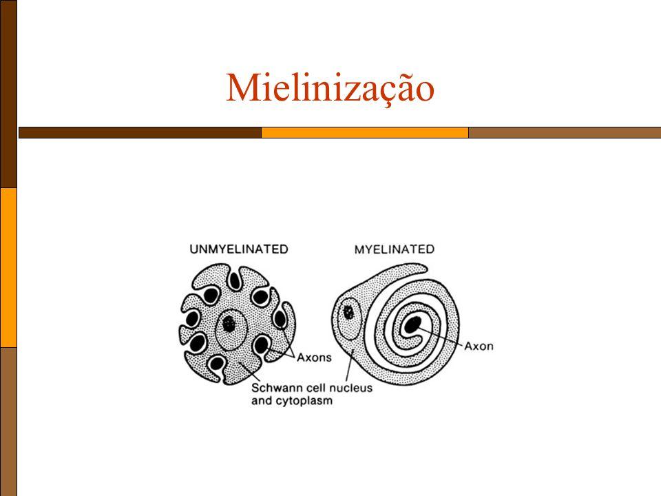 Mielinização