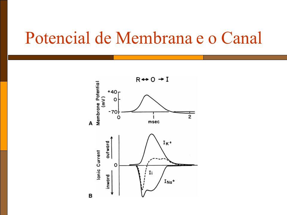 Potencial de Membrana e o Canal
