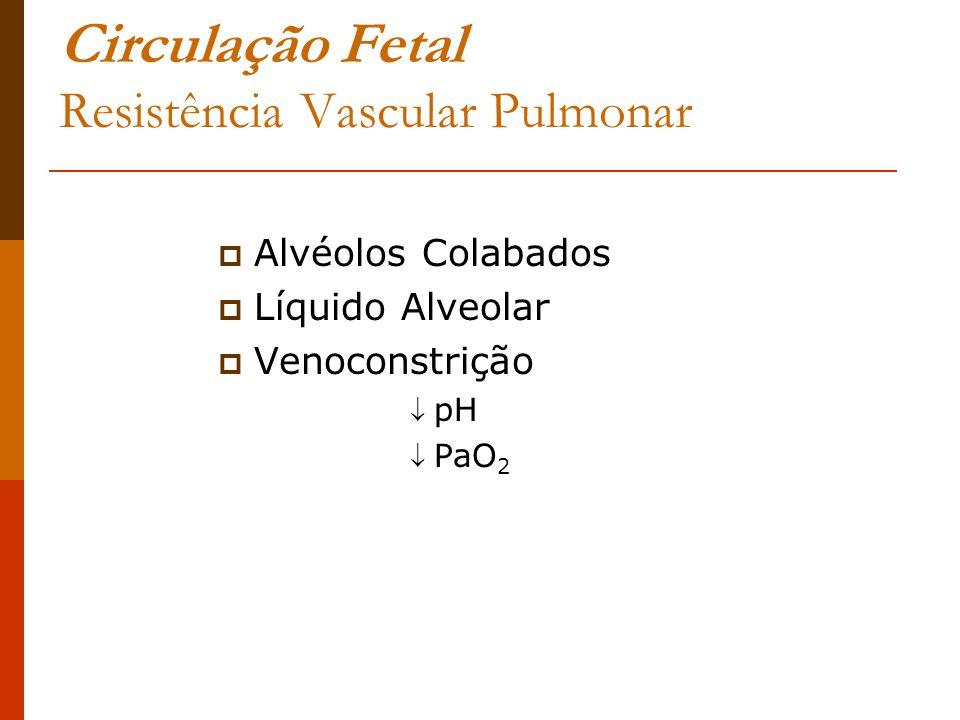 Circulação Fetal Resistência Vascular Pulmonar