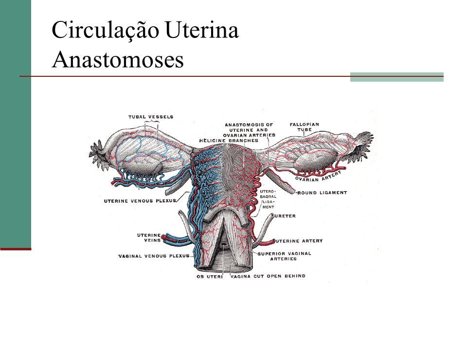 Circulação Uterina Anastomoses