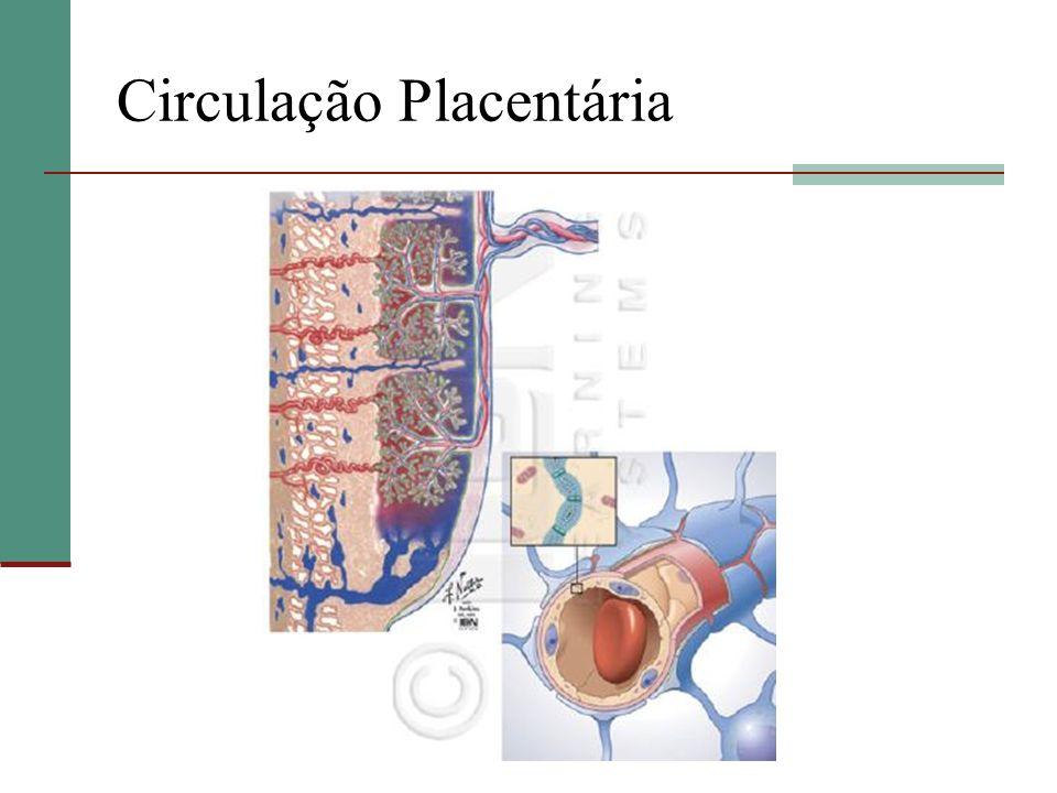 Circulação Placentária