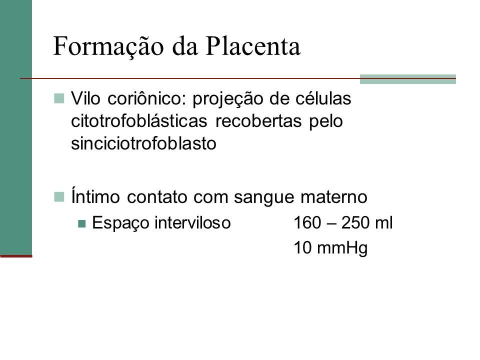 Formação da PlacentaVilo coriônico: projeção de células citotrofoblásticas recobertas pelo sinciciotrofoblasto.