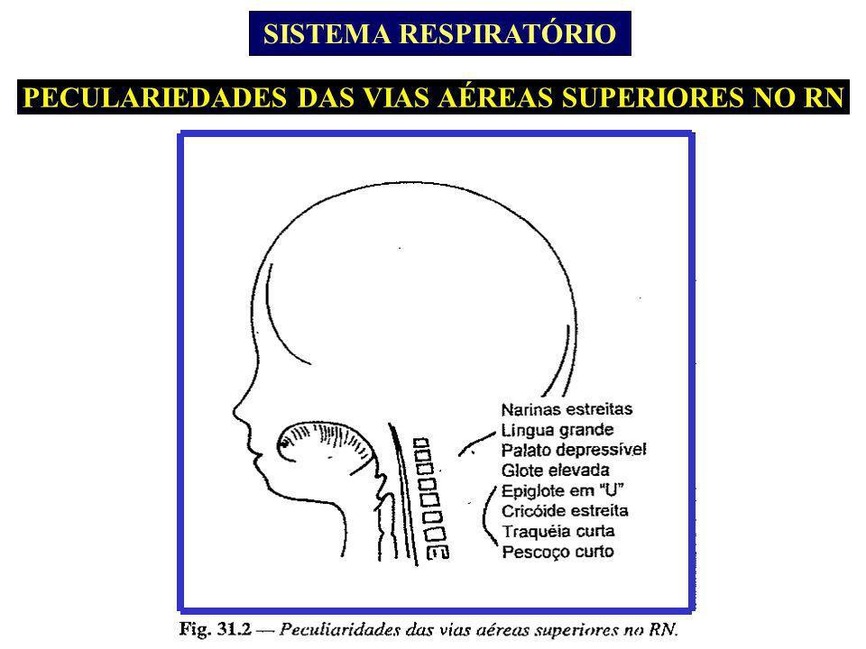 PECULARIEDADES DAS VIAS AÉREAS SUPERIORES NO RN