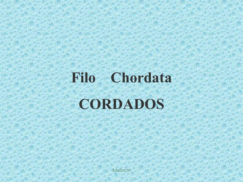 Filo Chordata CORDADOS