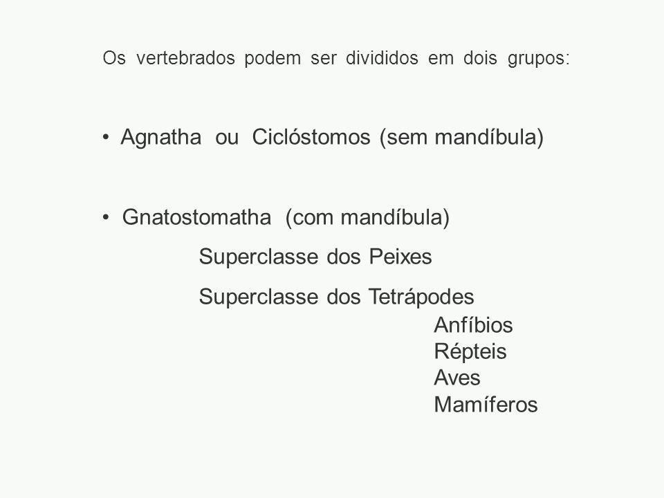 Os vertebrados podem ser divididos em dois grupos: