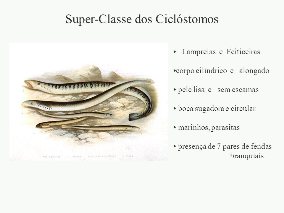 Super-Classe dos Ciclóstomos