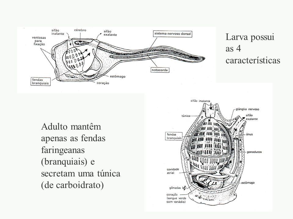 Larva possui as 4 características