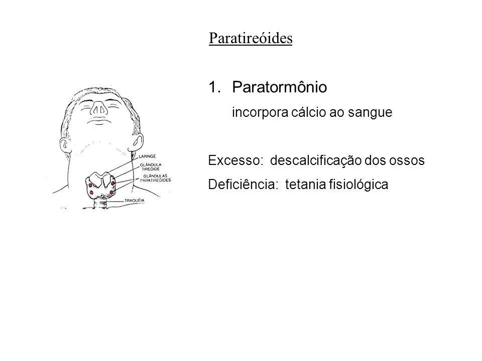 Paratireóides Paratormônio incorpora cálcio ao sangue