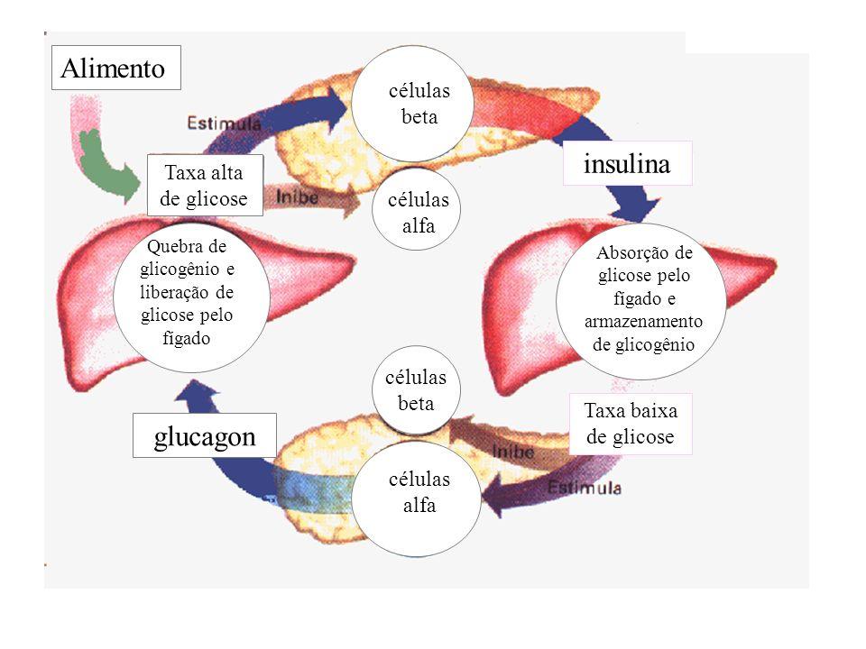 Alimento insulina glucagon células beta Taxa alta de glicose