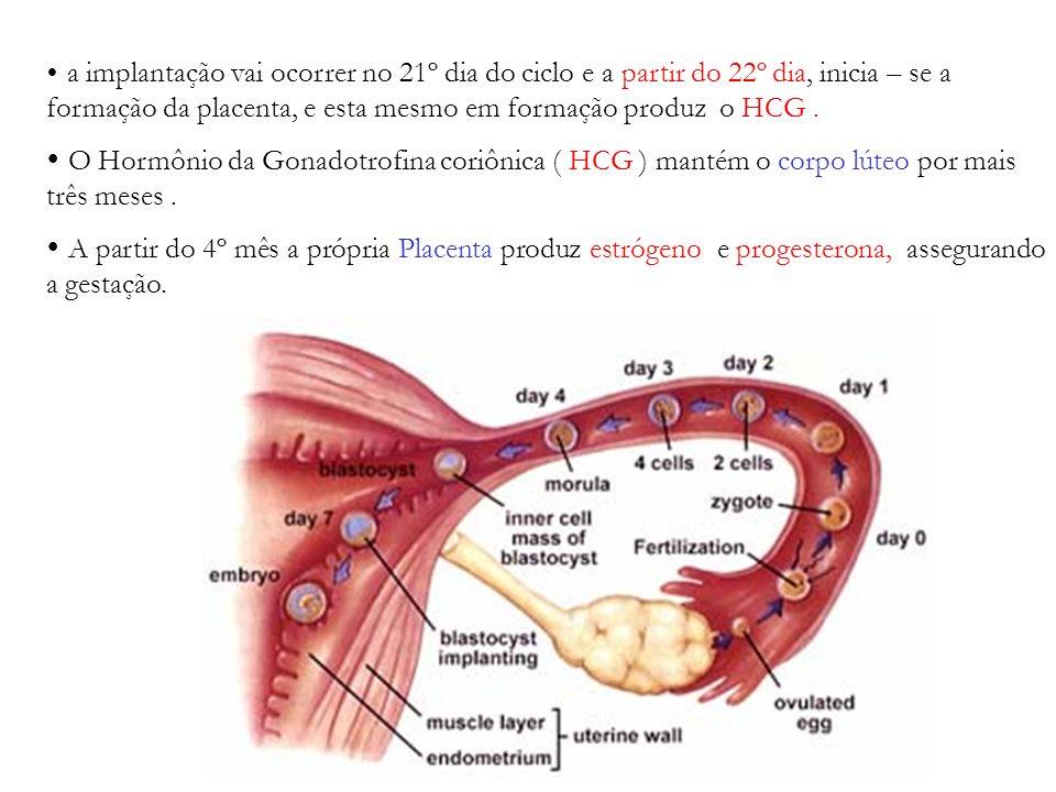 a implantação vai ocorrer no 21º dia do ciclo e a partir do 22º dia, inicia – se a formação da placenta, e esta mesmo em formação produz o HCG .