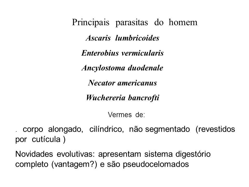 Enterobius vermicularis Ancylostoma duodenale