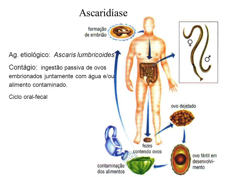 Ascaridíase Ag. etiológico: Ascaris lumbricoides