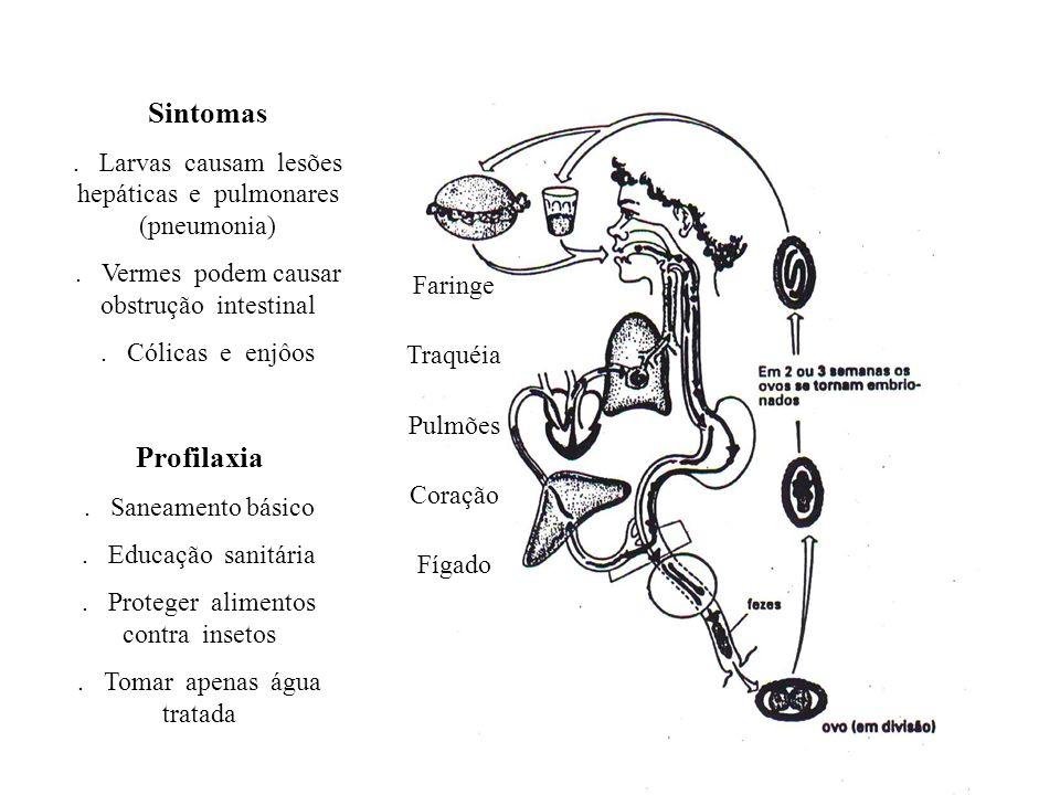 Sintomas . Larvas causam lesões hepáticas e pulmonares (pneumonia) . Vermes podem causar obstrução intestinal.