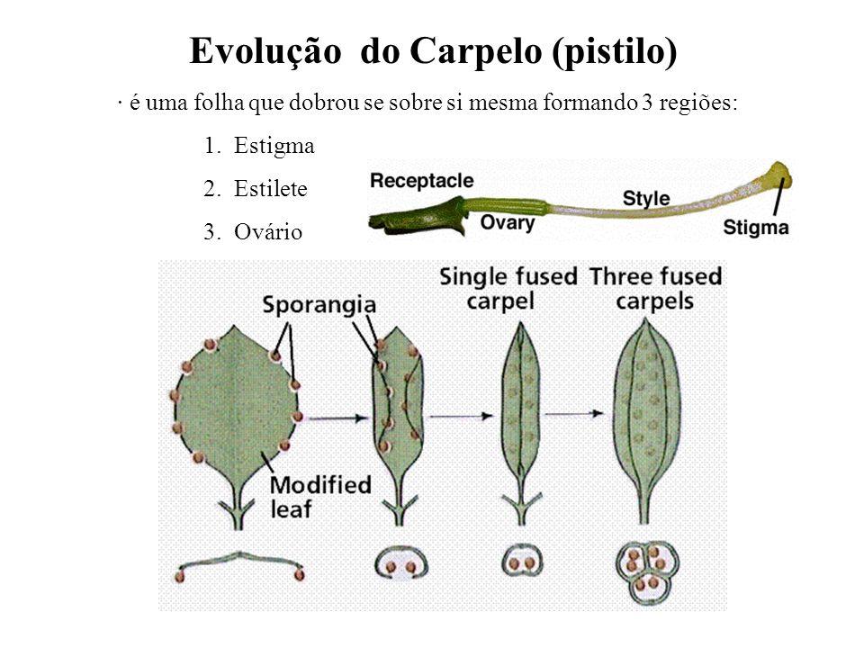 Evolução do Carpelo (pistilo)