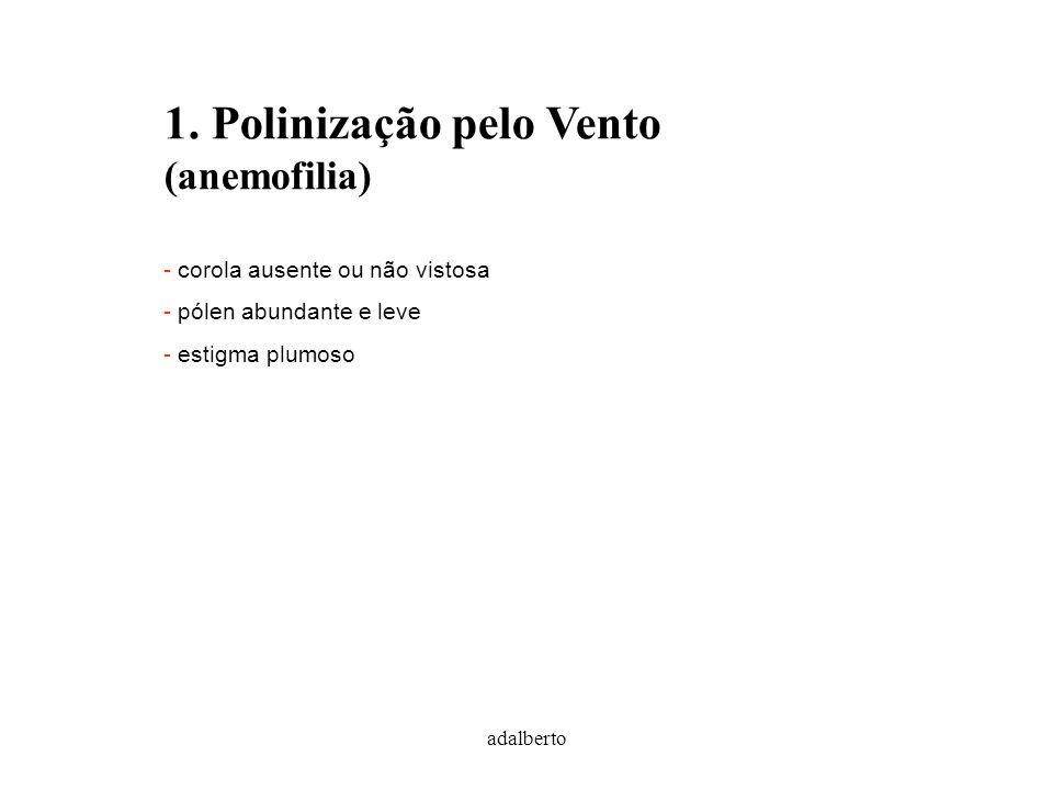 1. Polinização pelo Vento (anemofilia)