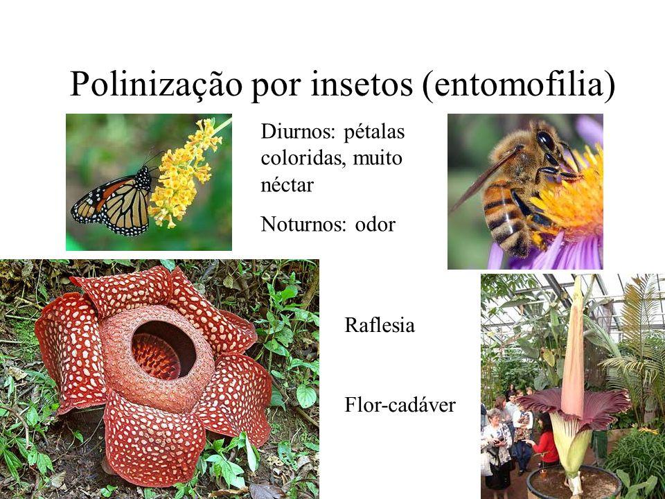 Polinização por insetos (entomofilia)