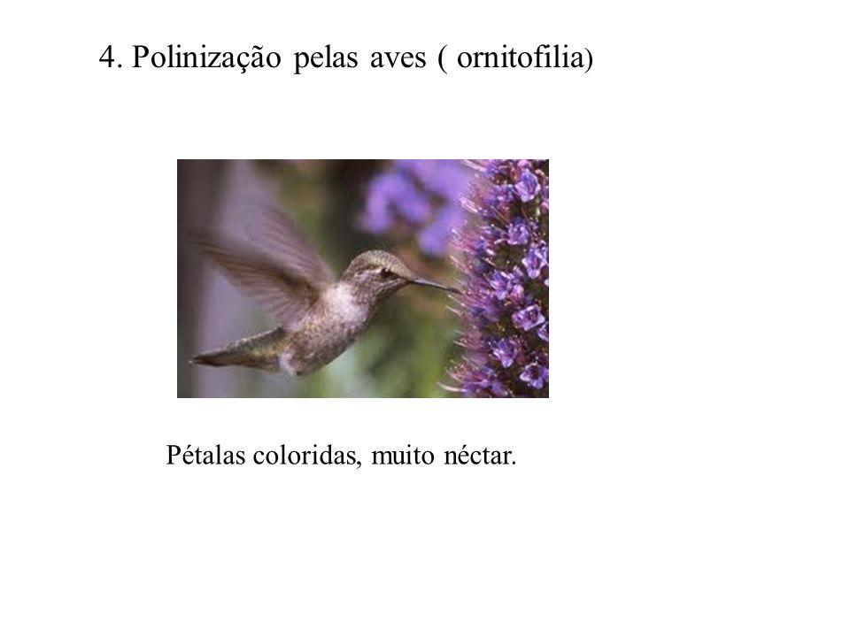 4. Polinização pelas aves ( ornitofilia)