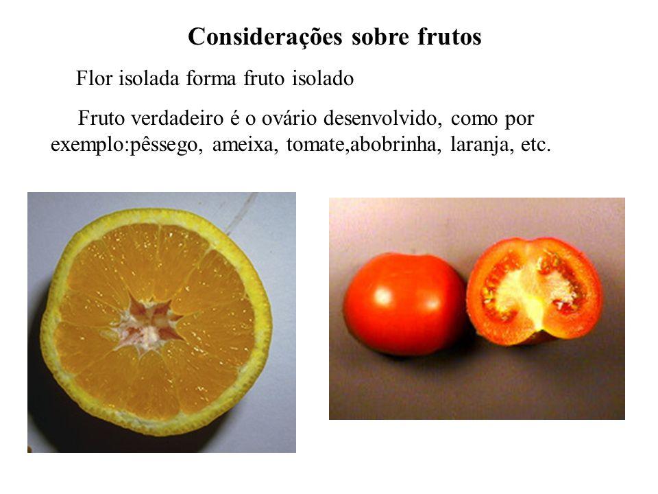 Considerações sobre frutos