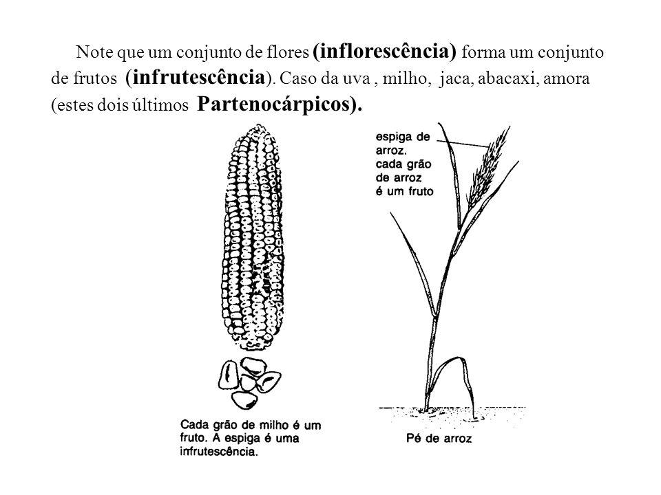 Note que um conjunto de flores (inflorescência) forma um conjunto de frutos (infrutescência). Caso da uva , milho, jaca, abacaxi, amora (estes dois últimos Partenocárpicos).