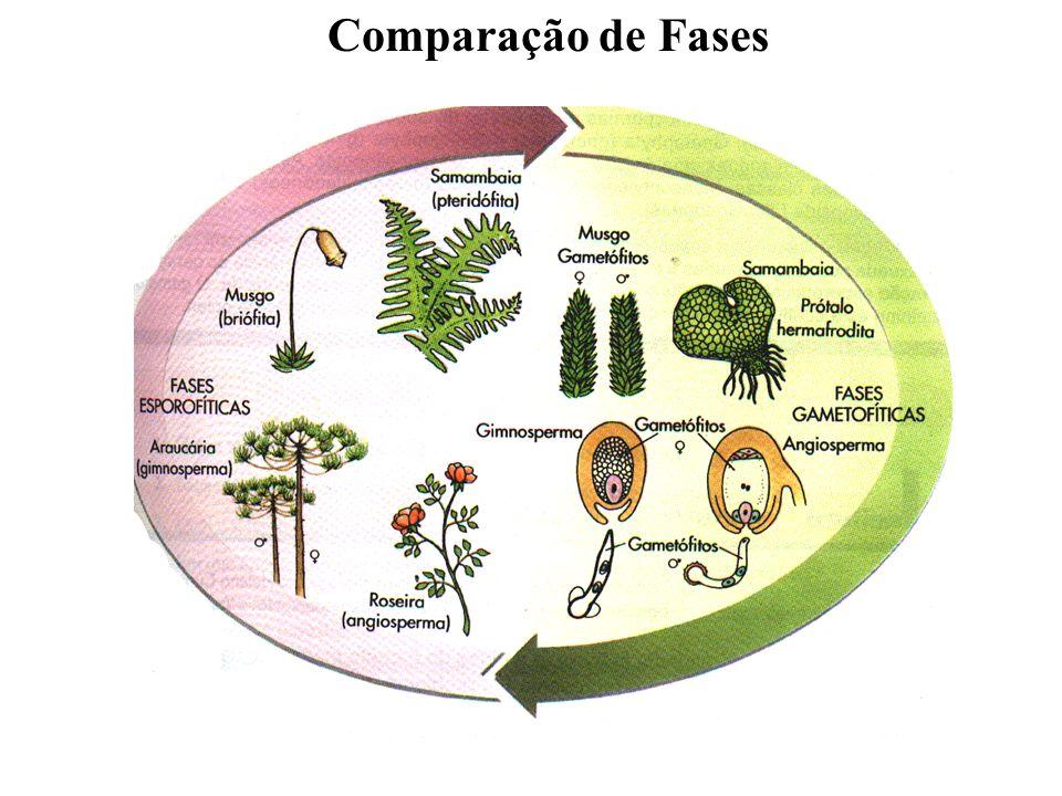 Comparação de Fases adalberto