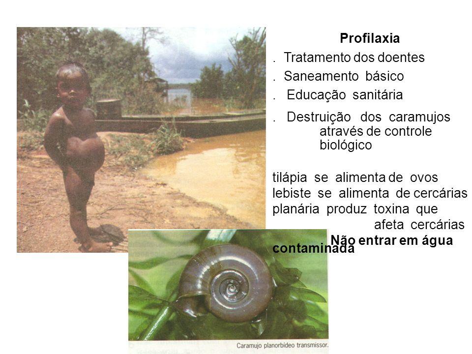 Profilaxia . Tratamento dos doentes. . Saneamento básico. . Educação sanitária.