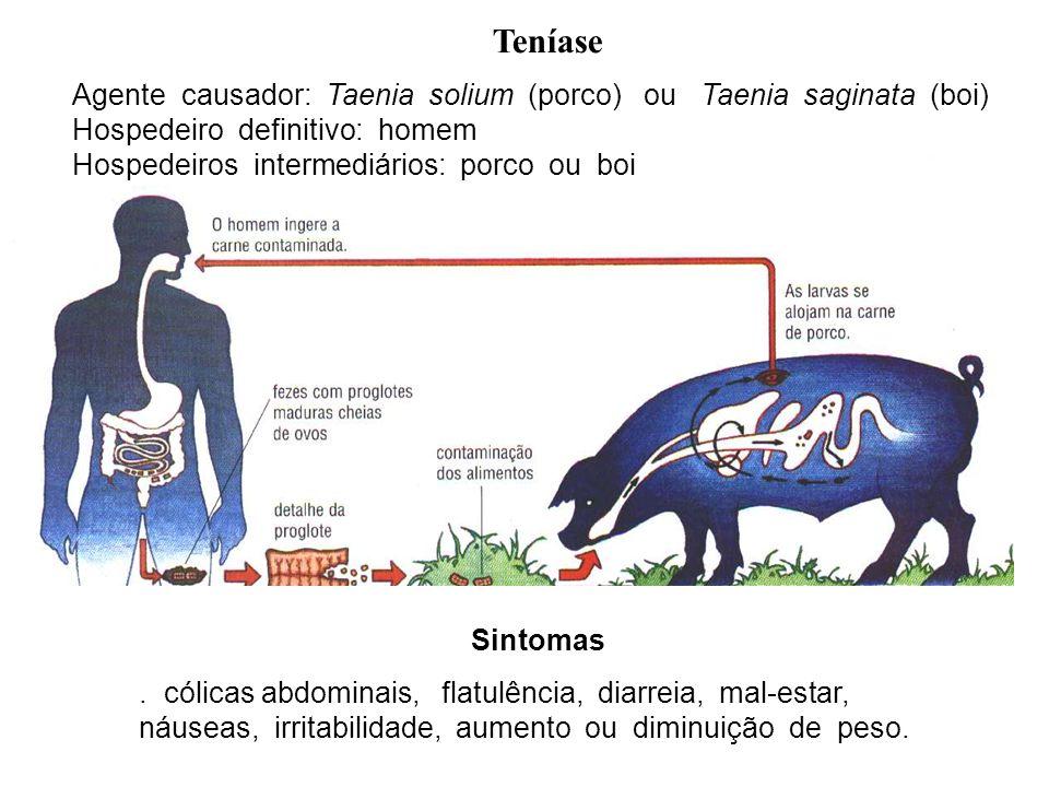 Teníase Agente causador: Taenia solium (porco) ou Taenia saginata (boi) Hospedeiro definitivo: homem.