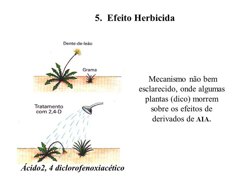 Ácido2, 4 diclorofenoxiacético
