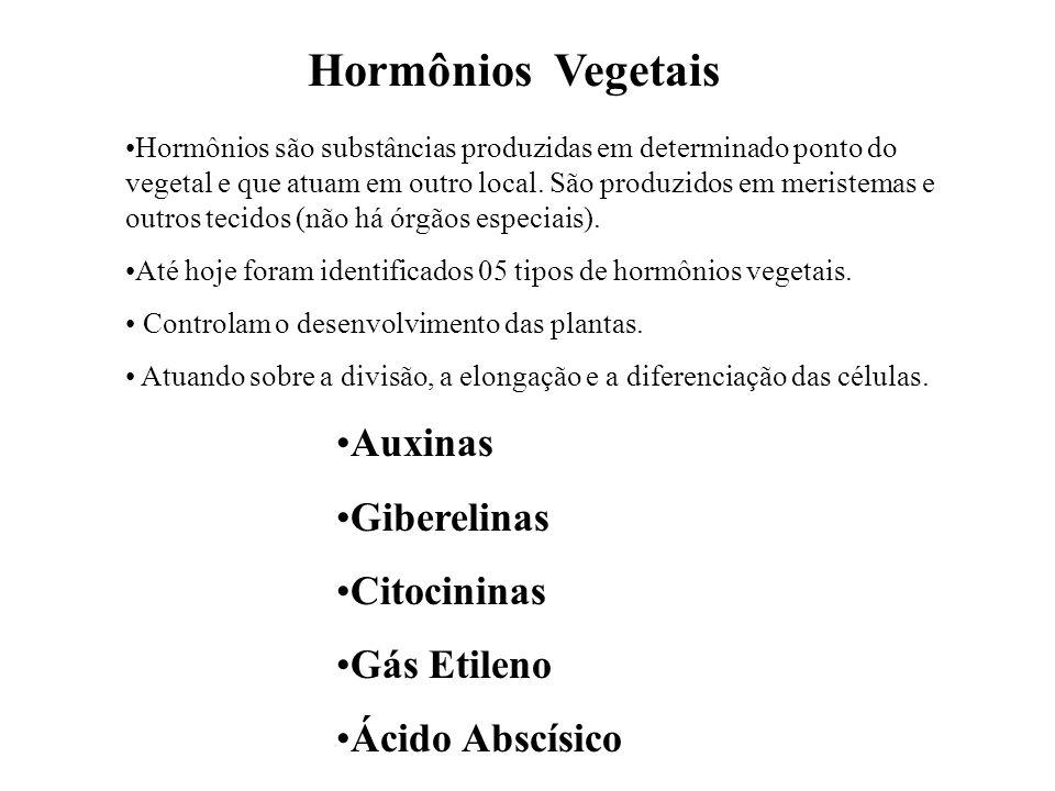 Hormônios Vegetais Auxinas Giberelinas Citocininas Gás Etileno