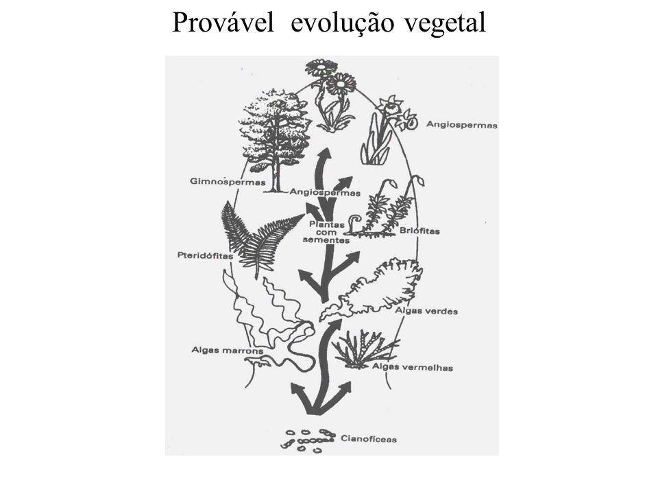 Provável evolução vegetal