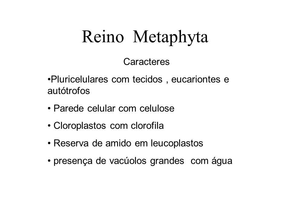 Reino Metaphyta Caracteres