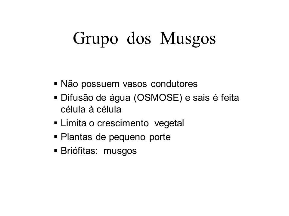 Grupo dos Musgos Não possuem vasos condutores