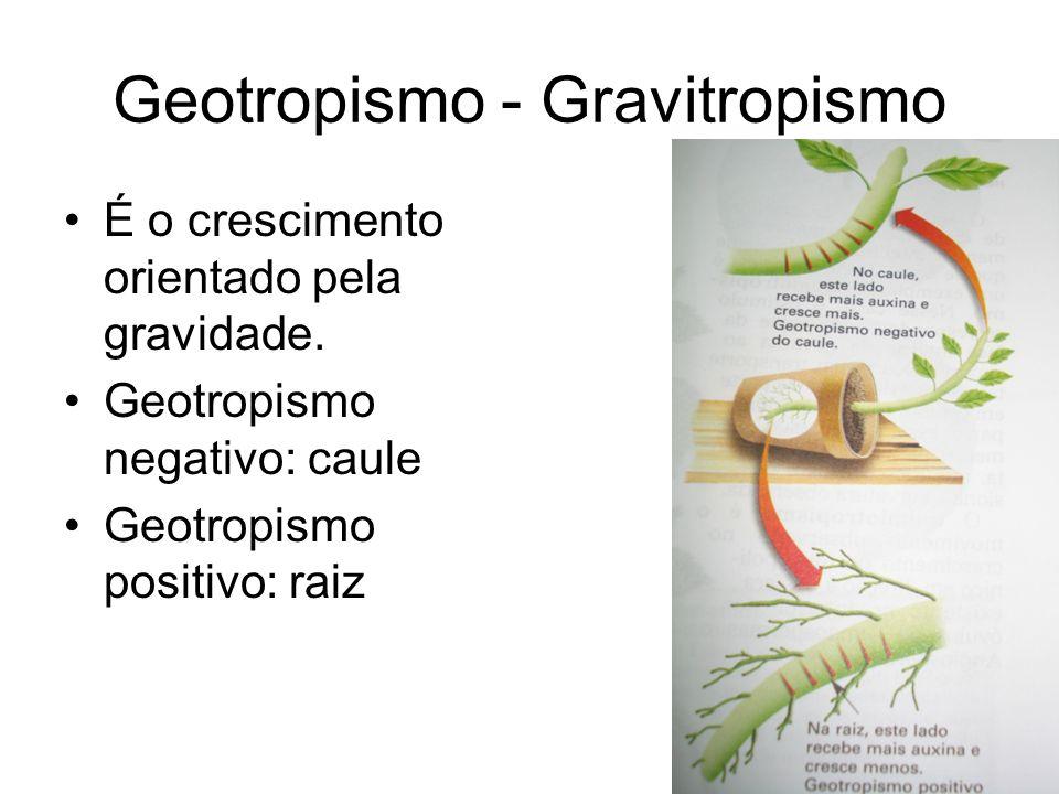 Geotropismo - Gravitropismo