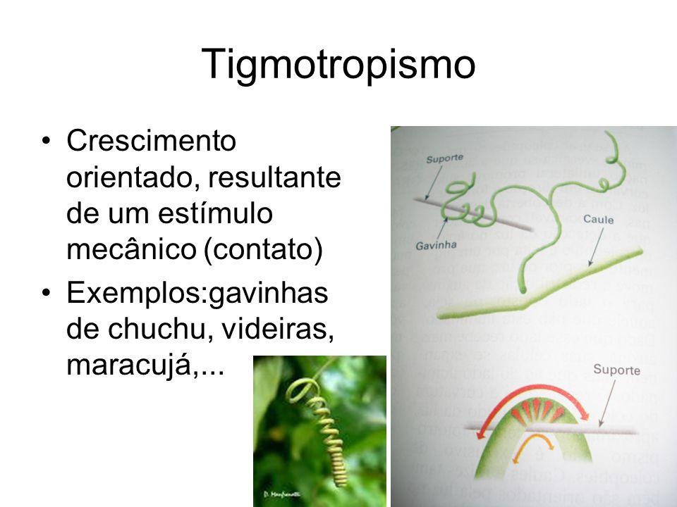 Tigmotropismo Crescimento orientado, resultante de um estímulo mecânico (contato) Exemplos:gavinhas de chuchu, videiras, maracujá,...
