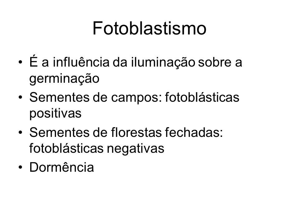 Fotoblastismo É a influência da iluminação sobre a germinação