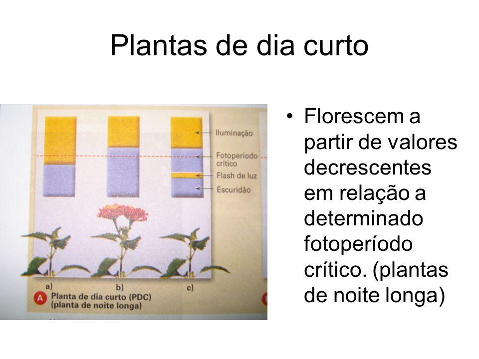 Plantas de dia curto Florescem a partir de valores decrescentes em relação a determinado fotoperíodo crítico.