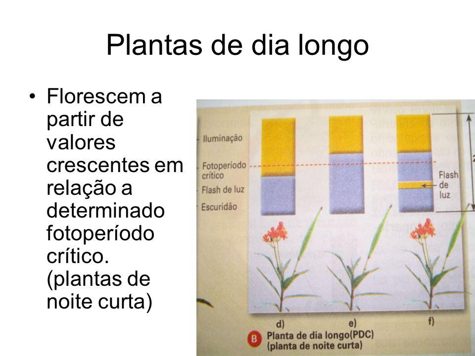 Plantas de dia longoFlorescem a partir de valores crescentes em relação a determinado fotoperíodo crítico.