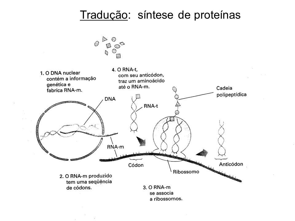 Tradução: síntese de proteínas
