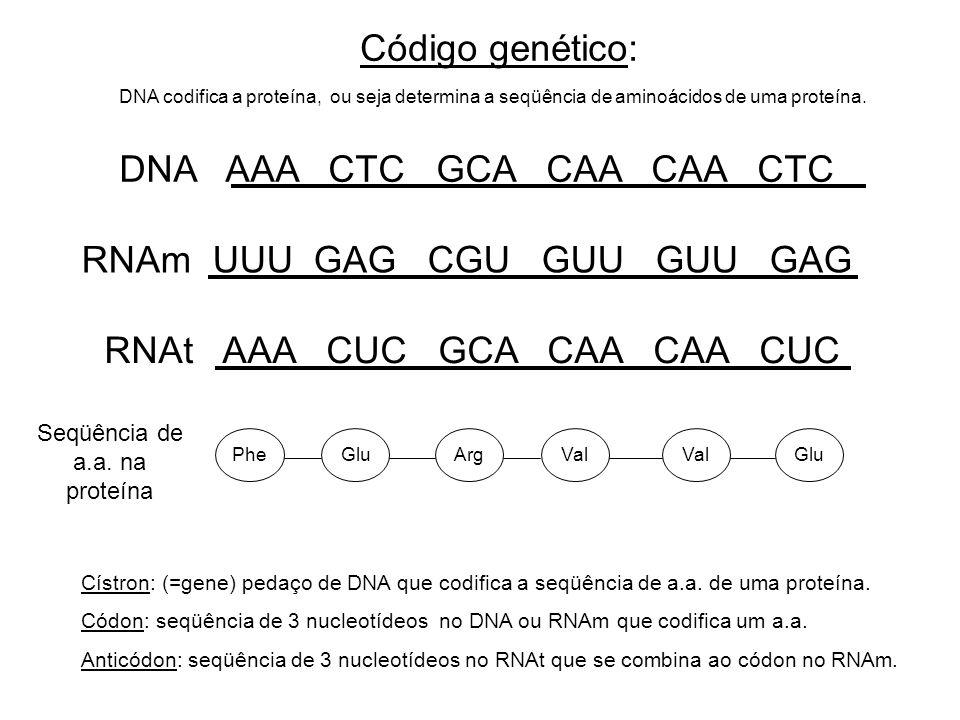 Seqüência de a.a. na proteína